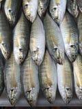 Rangée des poissons jaunes frais de scad de rayure Photographie stock libre de droits