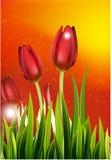Rangée des tulipes de ressort pour vous conception photo stock