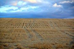 Rangées bien définies de couverture coupée de blé le flanc de coteau Images stock