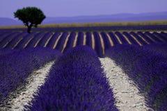 Rangées de lavande dans les Frances, beau paysage Photographie stock libre de droits