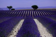 Rangées de lavande dans les Frances, beau paysage Image libre de droits