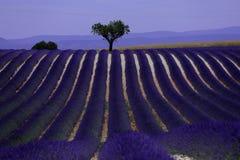 Rangées de lavande dans les Frances, beau paysage Image stock