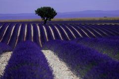 Rangées de lavande dans les Frances, beau paysage Photographie stock