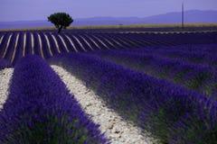 Rangées de lavande dans les Frances, beau paysage Photos stock