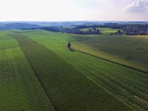 Rangées de maïs sur des terres cultivables dans une ville du sud Shrewsbu du comté de York Photo libre de droits