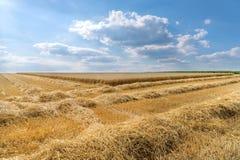 Rangées de paille devant un champ de blé images stock