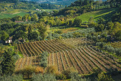 Rangées de vigne sous la rouille et la forme rouge un tapis au-dessus de la Rolling Hills en Toscane Images libres de droits