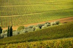 Rangées de vignoble dans le chianti, Toscane images stock