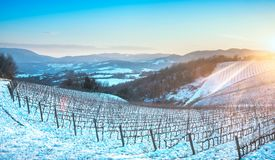 Rangées de vignobles couvertes par la neige en hiver au coucher du soleil Chianti, Sie images stock