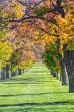Rangées des arbres d'automne Photo stock