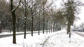 Rangées des arbres dans la neige Photos libres de droits