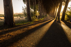 Rangées des arbres le long d'une route en Toscane, près de Follonica - 05/30/2016 Photographie stock