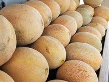 Rangées des cantaloups Photos libres de droits