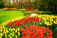 Rangées des fleurs de tulipe Photos libres de droits