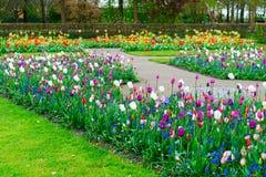 Rangées des fleurs de tulipe Images libres de droits