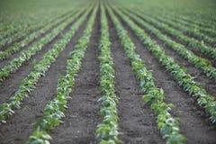 Rangées des jeunes plantes à la ferme Photo stock