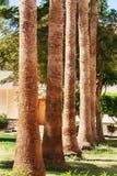 Rangées des palmiers le long d'une route images libres de droits
