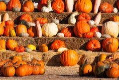 Rangées des pumkins à vendre avant Halloween Photo stock