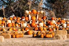 Rangées des pumkins à vendre avant Halloween Photographie stock libre de droits
