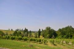 Rangées des raisins dans un vignoble Photographie stock libre de droits