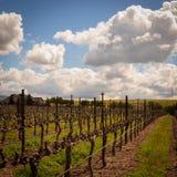 Rangées des vignes à un vignoble de la Californie photos libres de droits