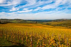 Rangées des vignes au vignoble en automne, chianti, Toscane, Italie Photos stock