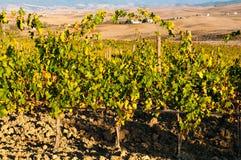 Rangées des vignes au vignoble en automne, ` Orcia, Toscane, Italie de Val D photos stock