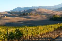 Rangées des vignes au vignoble en automne, ` Orcia, Toscane, Italie de Val D images libres de droits