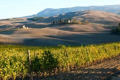 Rangées des vignes au vignoble en automne, ` Orcia, Toscane, Italie de Val D image stock