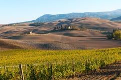 Rangées des vignes au vignoble en automne, ` Orcia, Toscane, Italie de Val D images stock