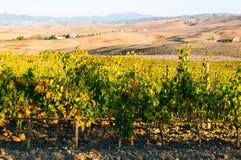 Rangées des vignes au vignoble en automne, ` Orcia, Toscane, Italie de Val D photographie stock libre de droits