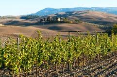 Rangées des vignes au vignoble en automne, ` Orcia, Toscane, Italie de Val D photographie stock