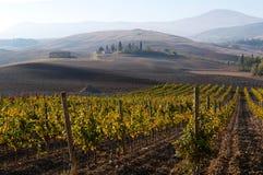 Rangées des vignes au vignoble sous le lever de soleil, Toscane, Italie photographie stock