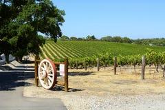 Rangées des vignes avec la porte de roue de wagen, la vallée Barossa, Australie du sud Photo libre de droits