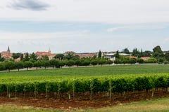 Rangées des vignes dans le paysage de plantation Images libres de droits