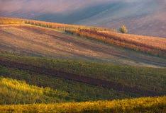 Rangées des vignes de vignoble Horizontal d'automne avec les vignes colorées Vignobles de raisin de République Tchèque Fond abstr Image libre de droits