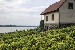 Rangées des vignes devant le vignoble Image stock
