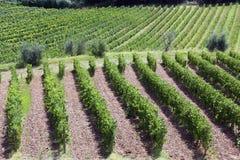 Rangées des vignes sur des collines de chianti, Toscane photos stock