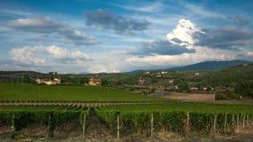 Rangées des vignobles verts dans la région de chianti le jour ensoleillé Saison d'été, Toscane Timelapse banque de vidéos