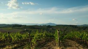 Rangées des vignobles verts dans la région de chianti le jour ensoleillé Saison d'été, Toscane Timelapse clips vidéos