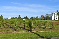 Rangées et vignes de gisement de framboise. Image libre de droits