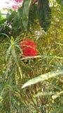rangan blomma Royaltyfri Bild