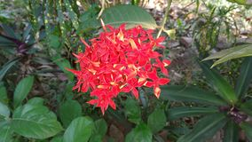 rangan blomma Royaltyfria Bilder