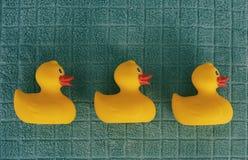 Rangée des canards en caoutchouc Photographie stock