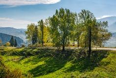 Range of poplar trees by the road on hillside Stock Image