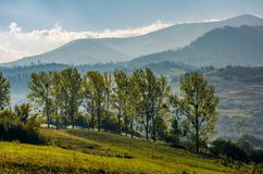 Range of poplar trees by the road on hillside. Beautiful morning in mountainous countryside Royalty Free Stock Photos