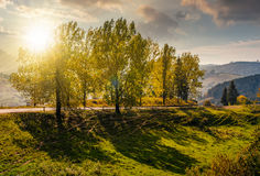 Range of poplar trees by the road on hillside at sunset Stock Photography