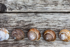 Range of spiral snails and shells on old wooden surface Royalty Free Stock Images