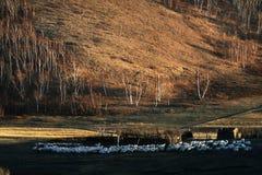 Rangeland of China Royalty Free Stock Photo