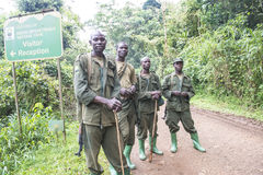 Ranger in Bwindi National Park. Ranger coming back from mountain gorilla trekking tour in the jungle of Biwindi Impenetrable National Park Stock Photo